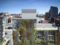 green walls in new york: a roundup of vertical gardens