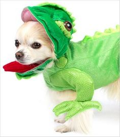 It's a dog dressed as an iguana. when is this ever a bad combo? LOL reminds me of you @Sarie Koes
