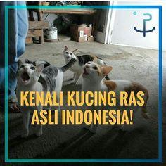 Kamu pecinta kucing? . Ini loh kucing ras Indonesia yang unik dan lucu-lucu  . Yuk tag pecinta kucing lainnya biar mereka tahu keunikan kucing Ras Indonesia . Follow @IndonesiaBertauhid Follow @IndonesiaBertauhid Follow @IndonesiaBertauhid . #IndonesiaBertauhid #IslamRahmatanLilAlamin http://ift.tt/2f12zSN