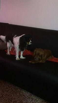 Maya e Polly