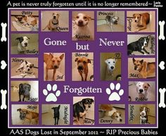 """OCTOBER is the OFFICIAL """"ADOPT A SHELTER DOG"""" MONTH.~ Partners of Arlington Animal SVCSs, in TX, makes a collage of dogs who didn't leave the facility alive.~GONE, BUT NOT FORGOTTEN. It's to honor lives lost too soon & a visual reminder of the importance of micro-chipping, working with rescue orgs when/if surrendering a pet, & altering their pets. www.petfinder.com/before-pet-adoption/october-is-adopt-a-shelter-dog-month.html  On the collage are 19 faces of dogs gone forever. ADOPT! DON'T…"""