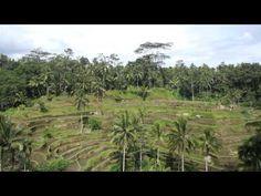 Tegalalang Rice Terrace, Ubud, Bali, Indonesia - YouTube