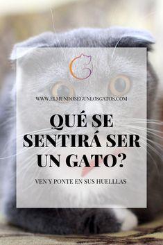 El Mundo Según Los Gatos Elmundosegunlosgatos Perfil Pinterest