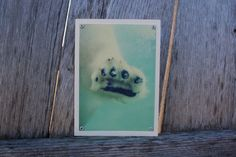 Polar Bear Paw Blank Note Card Animal Photography by HBBeanstalk, $3.00