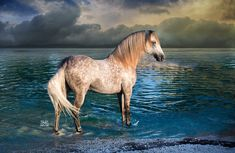 Photo by Stunning Steeds Race Horse Breeds, Campolina, Chincoteague Ponies, Cute Ponies, Wild Mustangs, Horse World, Friesian, White Horses, Equine Photography