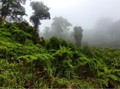 Vietnam, rural highland scenes while riding the Ho Chi Minh Trail (Pleiku - Hoi An)