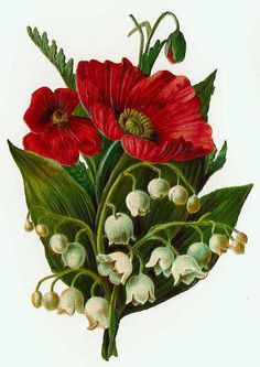 Victorian scrap - Poppies and lilies of the valley
