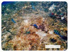 Snorkelling en Tailandia