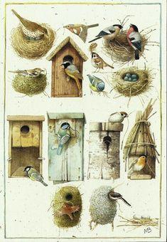 Little bird illustration marjolein bastin 29 Super Ideas – Bird Supplies Love Birds Drawing, Bird Drawings, Marjolein Bastin, Flora Und Fauna, Backyard Birds, Bird Illustration, Cute Birds, Little Birds, Wild Birds