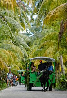 Seychelles Island - La Digue - where bicycles and Ox Cart rides are the only form of transport!