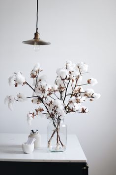 white heads of puffy cotton. such stunningly simple beauty. white heads of puffy cotton. such stunningly simple beauty. white heads of puffy cotton. such stunningly simple beauty. 2019 appeared first on Cotton Diy. White Interior Design, Interior Decorating, Decoration Entree, Cotton Decor, Style Deco, Dried Flowers, Interior Inspiration, Planting Flowers, Sweet Home