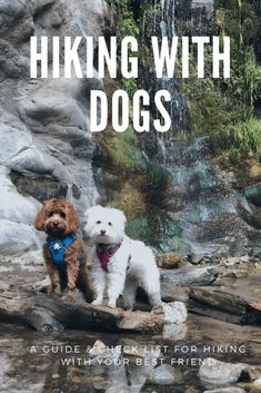 Hiking with dogs, a guide & check list for hiking with your best friend