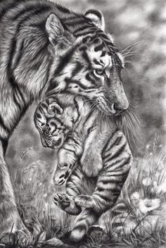 Pencil Sketching -- Need to start again