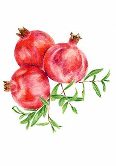 ORIGINAL Painting Pomegranate Food Watercolors by ForestSpiritArt
