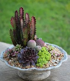 Succulents and waterwise plants combined in seasonal arrangements. Succulent topped pumpkins for autumn decor