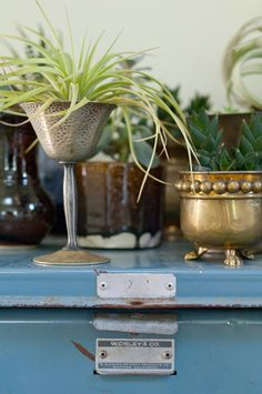 An unexpected vessel, like this vintage goblet, provides an interesting, one-of-kind display for an air plant. For a budget-friendly option, use something from around the house or peruse your local antique shop.