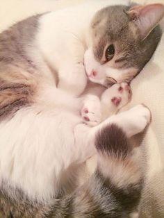 この猫より可愛い猫って存在するんか?(画像アルヨ