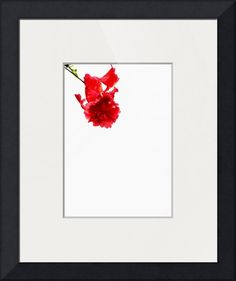 """Title: """"Bunga Raya Flower on White, Edit C"""". This is the Hibiscus Flower. Creation Date: 3 July 2014. Collection: NATURAL ORGANIC STILL LIFE PHOTOGRAPHY. Collection Years: 2014 (On-Going). Copyright 2014 Nawfal Johnson Photography . All Rights Reserved. Penang, Malaysia."""