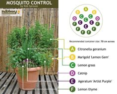 A mosquito deterring flower pot! Filled with all sorts of good plants to keep those boogers away!