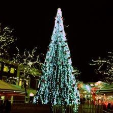 The Hague's International X-Mas Market  Vrijdag 14 december van 11:00 tot 20:00 uur zal de Kas op de Grote Markt het middelpunt zijn voor de Haagse 'expats'.  Diverse ambassades zullen hun steentje bijdragen aan een grenzeloos gezellige kerstsfeer door hun producten uit eigen land te presenteren.