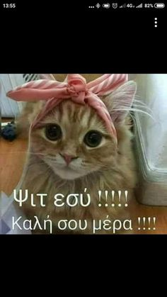 Καλημέρα! Good Morning Arabic, Good Morning Good Night, Cute Baby Animals, Animals And Pets, Funny Animals, Movie Quotes, Funny Quotes, Life Quotes, Motivational Quotes