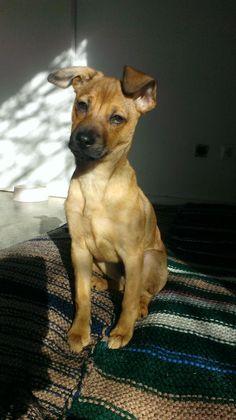¡ADOPTADO! TAO. Cachorro de cinco meses y medio y casi 4 kilos..