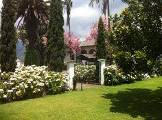 Hortensias y Arupos. Hacienda Tambillo Alto, Ecuador.