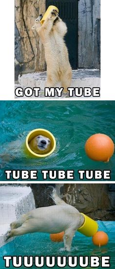 My god, this is hilarious. I wish I loved anything as much as this polar bear loves his tube.