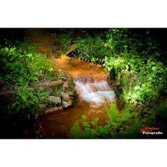 #bestshot #bestnatureshot #bns_nature #flower #canon #igmood #starwinners #ig_deutschland #picoftheday #photoofthedaycallenge #ig_week  #ig_photoofteday #instagood #primeshot #red #green #brook #water #canon #canonphotography #canon_official