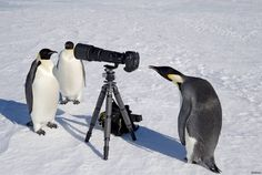 ペンギンかわいい:ハムスター速報