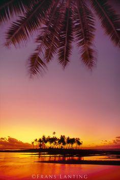 Palms at sunset, Bora Bora, Tahiti