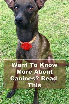 Become familiar with the medical peculiarities of the breed of dog you have chosen. Research his heritage and take preventative steps for problems you know he is a candidate for. Also, ask your vet what you can do to help your canine beat the odds for his breed.