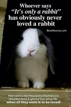 """Whoever says """"it's only a rabbit"""" has obviously never loved a rabbit."""