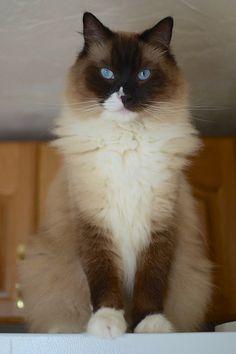 What a beautiful cat...