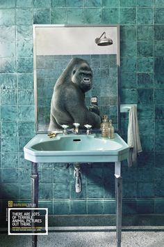 National Geographic Ads Feature Animals Taking Selfies Of Themselves  By John Yong, 12 May 2014 Comment Share   To promote the National Geographic Collection of nature images, Brazilian stock photo agency Diomedia created a series of cute print ads featuring animals taking selfies of themselves.