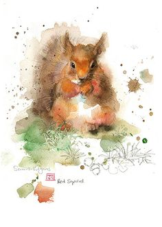 Red Squirrel by Jane Crowther. Design for Bug Art greeting cards. Watercolor Animals, Watercolor Paintings, Watercolours, Animal Paintings, Animal Drawings, Squirrel Art, Illustration Art, Illustrations, Bug Art