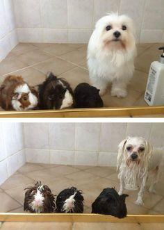 ¿Quién ha dicho que bañarse no es divertido? Igual algún Gremlin no está de acuerdo, pero vean primero estos animales graciosos antes y después de mojarse.