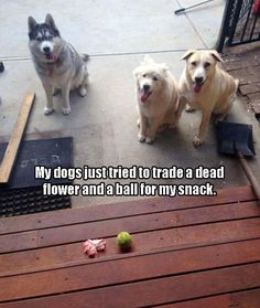 Funny dog bartering. Did it work? Did they get your snack?