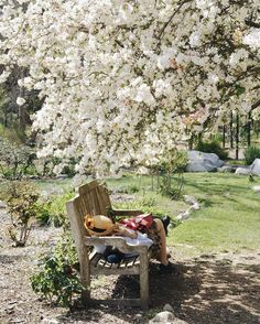 Went to see the cherry blossoms in bloom yesterday and this woman had the best seat in the house.