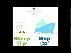 Improve your pronunciation: Sheep VS Ship. www.englisheverywhereforeveryone.com Esl, Sheep, Improve Yourself