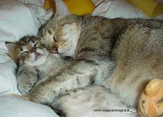 gatti in pennichella