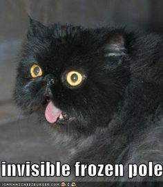 Funny Cats And Dogs | lol-
