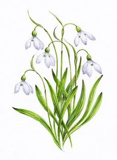 snowdrop tattoo | snowdrop tattoo image search results