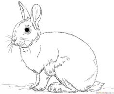 Cute Bunny Rabbit Coloring Page From Rabbits Category Select 25105 Printable Crafts Of Cartoons Nature Animals Bible And Many More