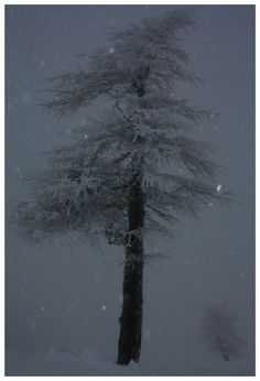 Tree in blizzard by Alison Spedding on 500px