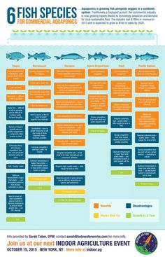 Infographic: Six Fish Species for Commercial Aquaponics - Indoor Ag-Con
