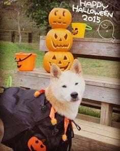 """""""あらためまして、皆さん Happy halloween❤️ 今日はハロウィンだし、なんかするかっ!ということで、家族で#成田ゆめ牧場 に行ってきたよ❤️ #僕だけ仮装したよ #ドラキュラ #のつもり #似合ってる? #ちょっと寒かったけど楽しかったよ❤️ #halloween #ハロウィン #仮装…"""""""