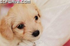 GIFs of Puppies Cuddling | Cute Cozy Puppy GIFs