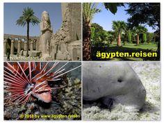 Ägypten.Reisen: Ob Nilkreuzfahrt oder Tauchem am Roten Meer Äypten ist immer eine Reise wert! Mount Rushmore, Mountains, Nature, Travel, Red Sea, Diving, Crosses, Naturaleza, Voyage