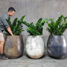 7 Best Succulents for Low Light Environments is part of Interior plants - There are a variety of succulents that can flourish in low light settings For your home or office, here's the 7 best succulents for low light environments Potted Plants Patio, House Plants Decor, Plant Decor, Indoor Plants, Outdoor Pots And Planters, Pots For Plants, Indoor Trees, Modern Planters, Container Gardening